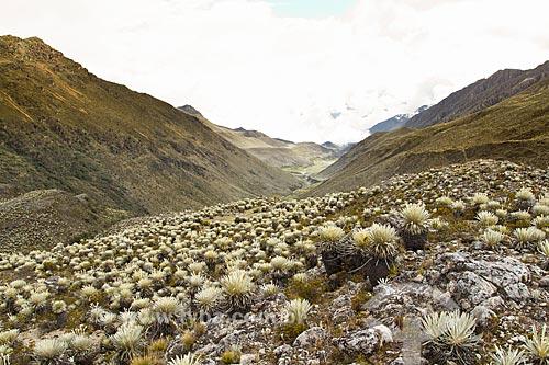 Local do acampamento antes da subida ao Pico Pan de Azúcar com paisagem típica dos páramos