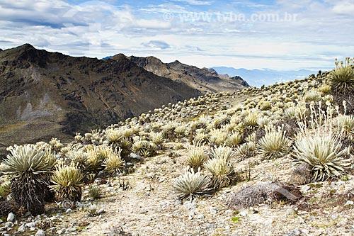 Assunto: Fim da trilha para o Pico Pan de Azúcar com paisagem típica dos páramos - Ecossistema encontrado em grandes altitudes do noroeste da América do Sul  / Local: Mérida - Mérida - Venezuela - América do Sul / Data: 05/2012