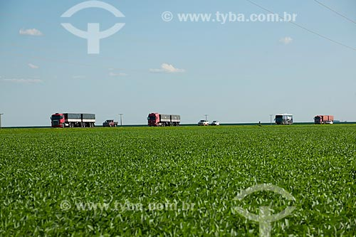 Assunto: Caminhões graneleiros passando em plantação de soja - Trecho da Rodovia BR-153  / Local: Rondonópolis - Mato Grosso (MT) - Brasil / Data: 12/2011