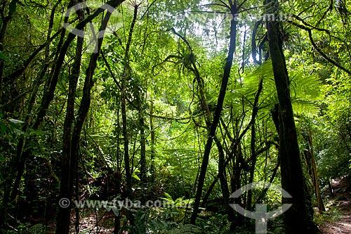 Assunto: Árvores no Parque Estadual Turístico do Alto Ribeira / Local: Apiaí - São Paulo (SP) - Brasil / Data: 02/2012