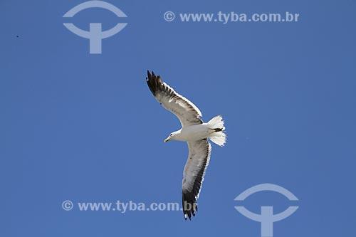Assunto: Gaivota voando na Praia dos Anjos / Local: Arraial do Cabo - Rio de Janeiro (RJ) - Brasil / Data: 02/2012