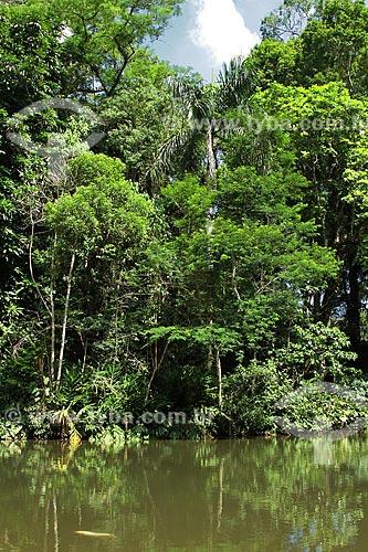 Assunto: Mata Atlântica da Floresta da Tijuca / Local: Rio de Janeiro (RJ) - Brasil / Data: 02/2012
