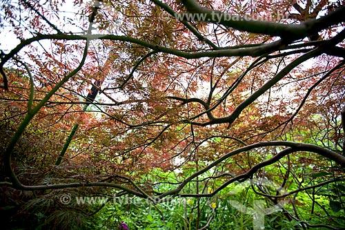 Assunto: Árvores no Jardim de Claude Monet / Local: Giverny - França - Europa / Data: 06/2012