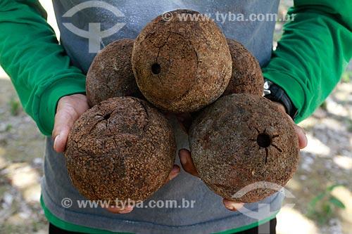 Assunto: Homem segurando ouriços de castanha na fazenda Aruanã / Local: Itacoatiara - Amazonas (AM) - Brasil / Data: 06/2012