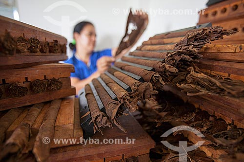 Assunto: Mulher trabalhando na produção de charutos - Don Francisco Charutos - Tabaco mata fina / Local: Fazenda Campo Verde - Cruz das Almas - Bahia (BA) - Brasil / Data: 07/2012