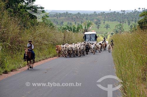 Assunto: Boiadeiros conduzindo o gado na Rodovia BR-010 (Conhecida popularmente como Belém-Brasília) / Local: Açailândia - Maranhão (MA) - Brasil / Data: 05/2012