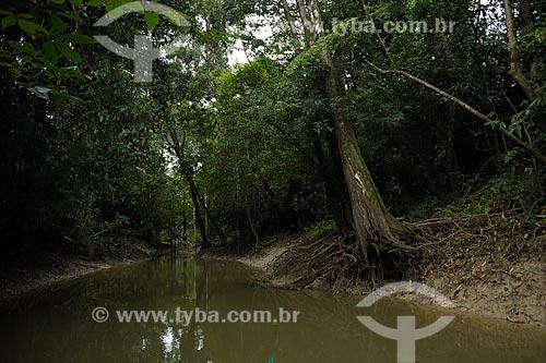 Assunto: Margens do Rio Branco / Local: Caracaraí - Roraima (RR) - Brasil / Data: 03/2012