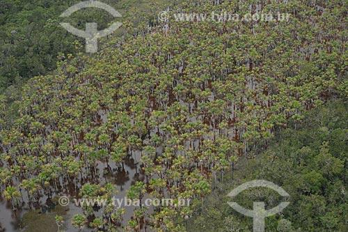 Assunto: Buritis (Mauritia flexuosa) no Parque Nacional Serra da Mocidade / Local: Caracaraí - Roraima (RR) - Brasil / Data: 03/2012