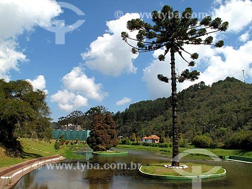 Assunto: Araucária na lagoa do Parque Capivari / Local: Vila Capivari - Campos do Jordão - São Paulo (SP) - Brasil / Data: 09/2012