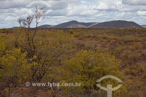 Assunto: Vegetação típica de caatinga no Parque Estadual de Canudos / Local: Canudos - Bahia (BA) - Brasil / Data: 06/2012