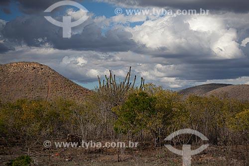 Assunto: Vegetação típica da caatinga no sertão da Bahia / Local: Euclides da Cunha - Bahia (BA) - Brasil / Data: 06/2012