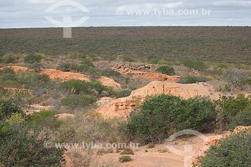 Assunto: Processo de desertificação do solo na Estação Ecológica Raso da Catarina / Local: Paulo Afonso - Bahia (BA) - Brasil / Data: 06/2012