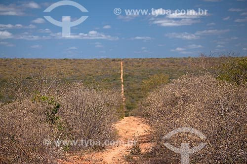 Assunto: Paisagem de vegetação típica da caatinga na Estação Ecológica Raso da Catarina / Local: Paulo Afonso - Bahia (BA) - Brasil / Data: 06/2012