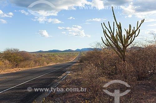Assunto: Rodovia federal BR-428 no sertão de Pernambuco / Local: Orocó - Pernambuco (PE) - Brasil / Data: 06/2012