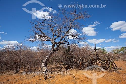 Assunto: Vegetação típica do sertão de Pernambuco / Local: Petrolina - Pernambuco (PE) - Brasil / Data: 06/2012