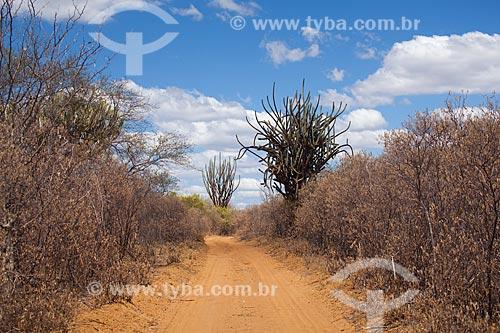 Assunto: Cacto facheiro (Pilosocereus pentaedrophorus) na beira da estrada de terra no sertão de Pernambuco / Local: Petrolina - Pernambuco (PE) - Brasil / Data: 06/2012