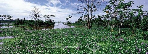 Vegetação aquática de um lago de várzea, na Reserva de Desenvolvimento Sustentável Mamirauá, no estado do Amazonas, Brasil.  - Amazonas