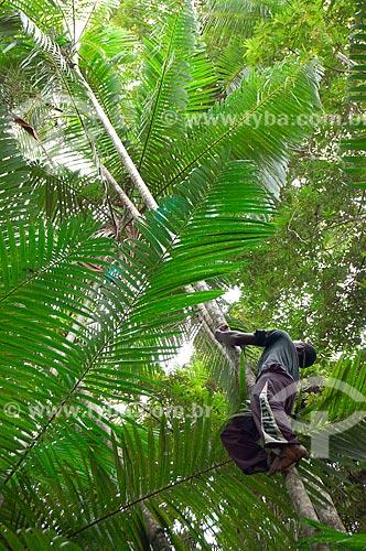 Assunto: Homem subindo em açaizal  / Local: Pará (PA) - Brasil / Data: 10/2009