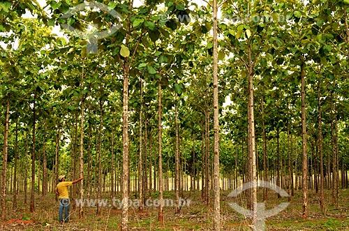 Assunto: Plantio de Teca (Tectona grandis) / Local: Tanabi - São Paulo (SP) - Brasil / Data: 12/2011