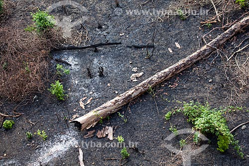 Assunto: Local de Caatinga após queimada / Local: Quixadá - Ceará (CE) - Brasil / Data: 11/2012