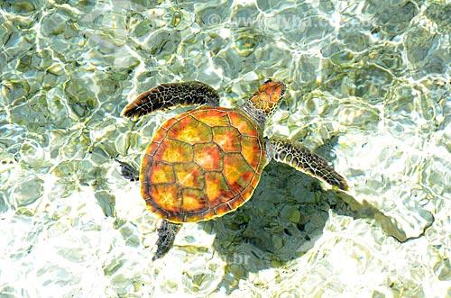 Assunto: Tartaruga marinha em água cristalina / Local: Ilha Bora Bora - Polinésia Francesa - Oceania / Data: 10/2012