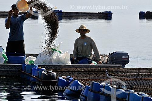 Trabalhadores alimentam Tilápias em tanques-rede  - Buritama - São Paulo - Brasil