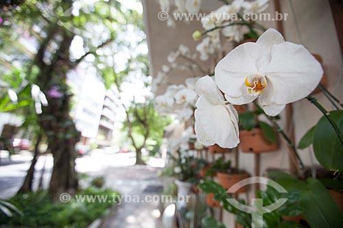 Assunto: Orquídeas Phalaenopsis brancas na esquina das ruas Aníbal de Mendonça com Redentor / Local: Ipanema - Rio de Janeiro (RJ) - Brasil / Data: 11/2012