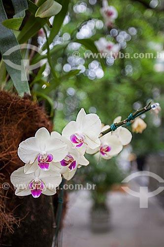 Assunto: Orquídeas Phalaenopsis Semi Alba na rua Nascimento Silva   / Local: Ipanema - Rio de Janeiro (RJ) - Brasil / Data: 11/2012