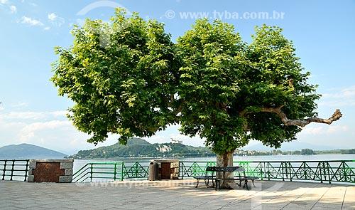 Assunto: Árvore em mirante às margens do Lago Maggiore / Local: Arona - Piemonte - Itália - Europa / Data: 06/2012