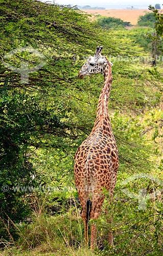 Assunto: Girafa no Parque Nacional de Nairobi / Local: Nairobi - Quênia - África / Data: 09/2010