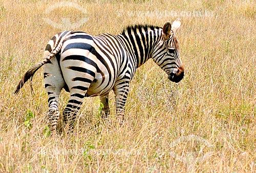 Assunto: Zebra no Parque Nacional de Nairobi / Local: Nairobi - Quênia - África / Data: 09/2010