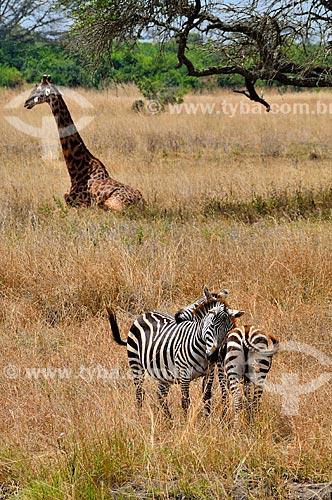 Assunto: Animais no Parque Nacional de Nairobi / Local: Nairobi - Quênia - África / Data: 09/2010