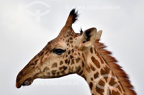 Assunto: Detalhe de girafa no Parque Nacional de Nairobi / Local: Nairobi - Quênia - África / Data: 09/2010