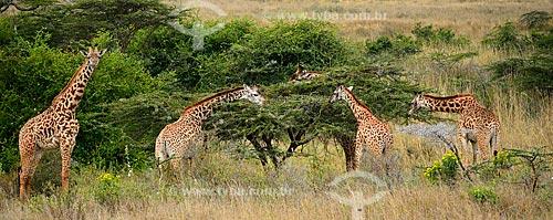 Assunto: Girafas no Parque Nacional de Nairobi / Local: Nairobi - Quênia - África / Data: 09/2010