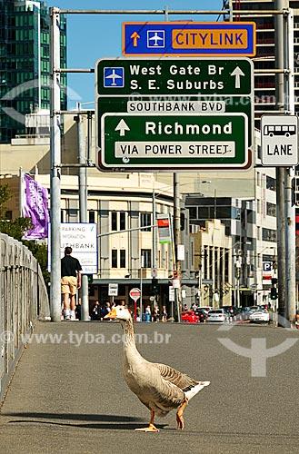 Assunto: Ganso andando na Queens Bridge (1889) / Local: Melbourne - Austrália - Oceania / Data: 10/2010