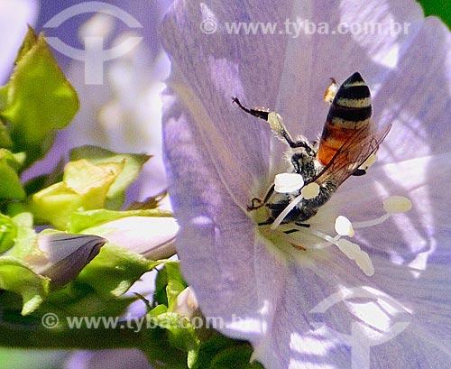 Assunto: Abelha pousada sobre uma flor no Semmer Villas - condomínio residencial em uma área deserta / Local: Dubai - Emirados Árabes Unidos - Ásia / Data: 11/2010