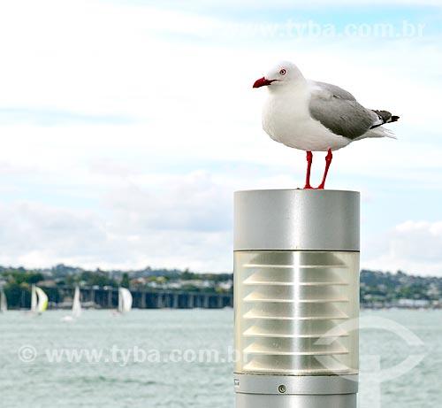 Assunto: Gaivota pousada sobre luminária em Princes Wharf (Cais da Princesa) / Local: Auckland - Nova Zelândia - Oceania / Data: 01/2011