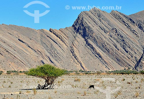 Assunto: Estrada em Wadi Sal al Aala / Local: Musandam - Omã - Ásia / Data: 02/2011