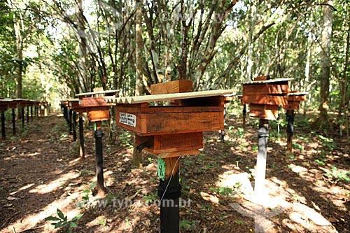 Assunto: Criação de Abelhas Indígenas (sem ferrão) para fabriação de mel / Local: Alta Floresta - Mato Grosso (MT) - Brasil / Data: 05/2012