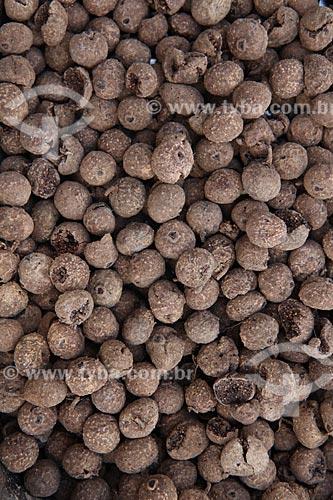 Assunto: Sementes de Figueira Branca (Ficus guaranitica) / Local: Alta Floresta - Mato Grosso (MT) - Brasil / Data: 05/2012