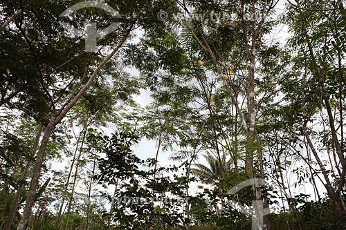 Assunto: Mata nativa em Alta Floresta / Local: Alta Floresta - Mato Grosso (MT) - Brasil / Data: 05/2012