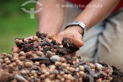Assunto: Sementes nativas da floresta amazônica utilizadas para reflorestamento / Local: Alta Floresta - Mato Grosso (MT) - Brasil / Data: 05/2012