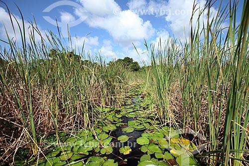 Assunto: Plantas aquáticas na Reserva Biológica Lago Piratuba / Local: Amapá (AP) - Brasil / Data: 05/2012