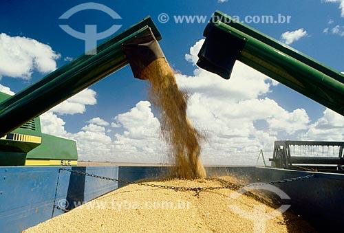 Assunto: Descarregamento de soja / Local: Distrito Baús - Costa Rica - Mato Grosso do Sul ( MS ) - Brasil / Data: 06/2011