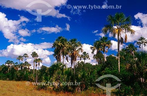 Assunto: Buritis no Parque Nacional Grande Sertão Veredas / Local: Chapada Gaúcha - Minas Gerais (MG) - Brasil / Data: 07/2004