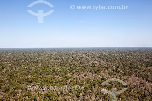 Assunto: Vista aérea do Parque Indígena do Xingu / Local: Gaúcha do Norte - Mato Grosso (MT) - Brasil / Data: 08/2012