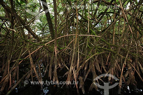 Assunto: Canal do Rio Sucuriju em direção ao Lago Piratuba - Reserva Biológica Lago Piratuba / Local: Amapá (AP) - Brasil / Data: 05/2012