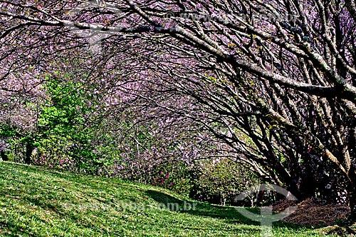 Assunto: Bosque de Cerejeiras no Parque do Carmo em Itaquera / Local: Itaquera - São Paulo (SP) - Brasil / Data: 08/2008