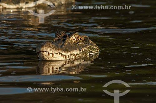 Assunto: Jacaré-açu (Melanosuchus niger) no Lago Mamirauá / Local: Amazonas (AM) - Brasil / Data: 10/2007
