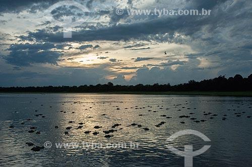 Assunto: Pôr do sol no Lago Mamirauá com diversos Jacarés-Açu no lago / Local: Amazonas (AM) - Brasil / Data: 10/2007